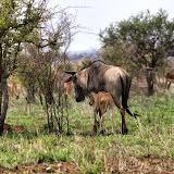 KrugerPart1