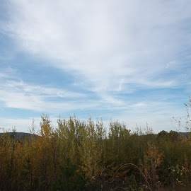 Есен by Georgi Kolev - Novices Only Landscapes ( небе., цветове., храсти., ден., есенен. )