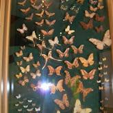 Houston Museum of Natural Science - 116_2857.JPG