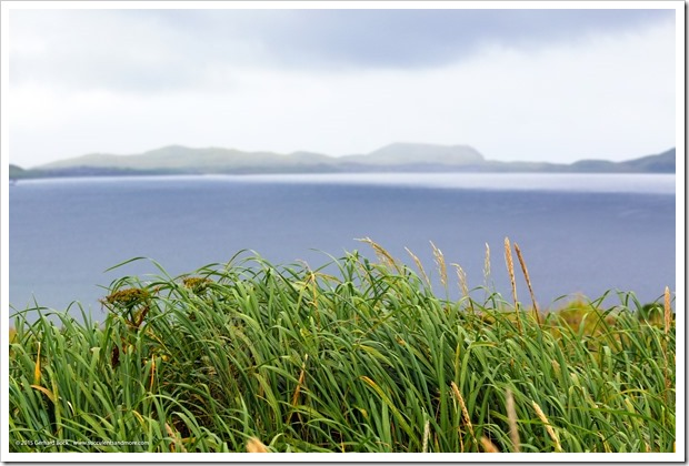 150907_Adak_beachgrass_WM