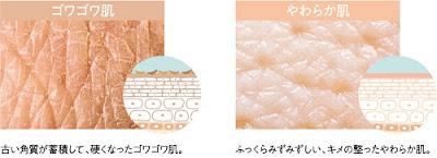 肌へイメージ画像500×181.jpg