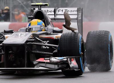 Эстебан Гутьеррес и птичка над колесом его Sauber во время свободных заездов на Гран-при Канады 2013