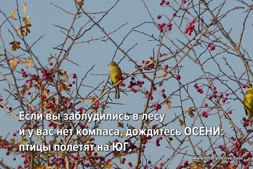Птички сидят на ветках дерева. Осень