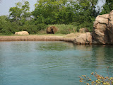 An elephant at the Nashville Zoo 09032011
