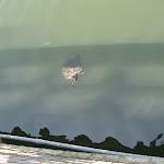 Barefoot Landing - Myrtle Beach - 040410 - 06