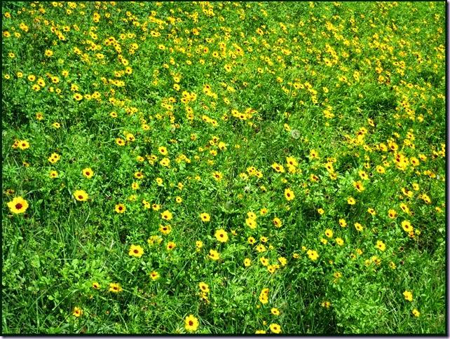 flowersIMG_4446