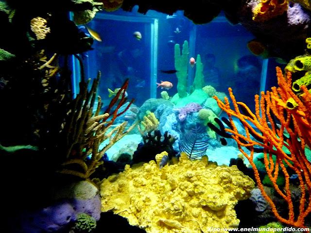 acuario-peces-indico.JPG