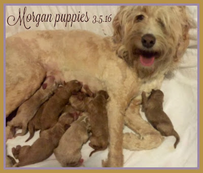 Morgan new puppies 3-5-16