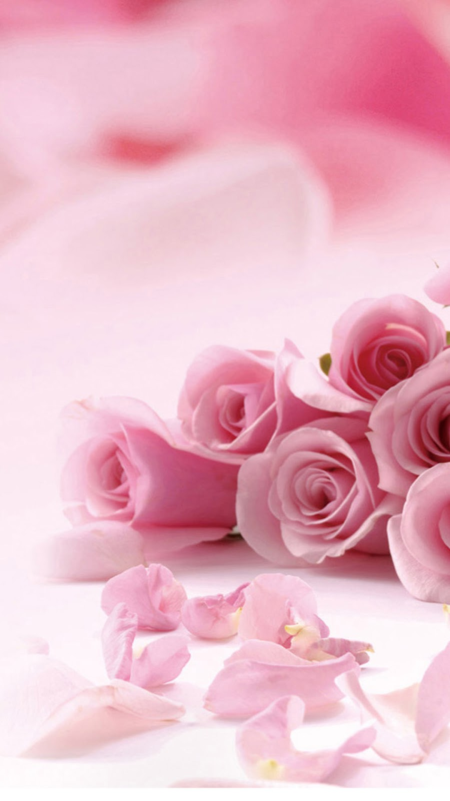 Pink Rose Flower Iphone 6 Plus Hd Wallpaper Iphone Wallpapers And