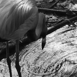Flamingo by Milton Moreno - Instagram & Mobile iPhone (  )