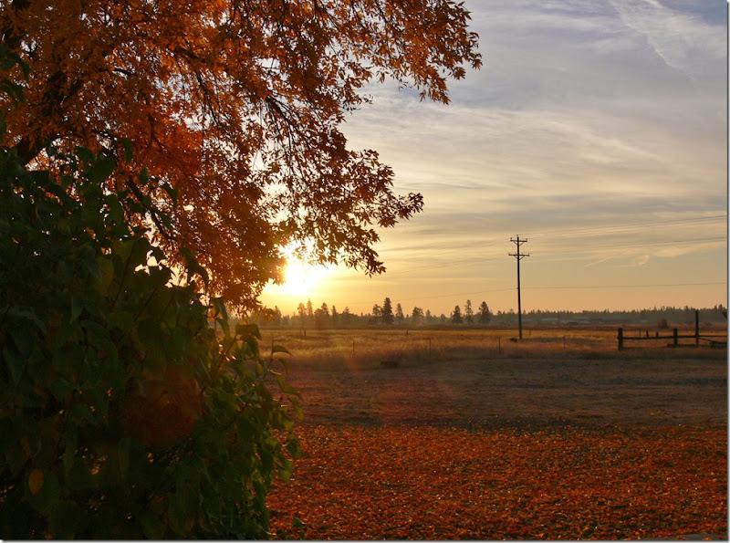 fall 006 (2)