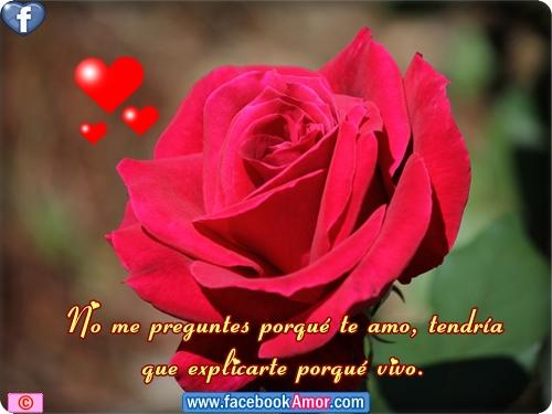Mensajes de amor con rosa roja Mensajes Bonitos de  - Imagenes De Rosas Rojas Con Frases