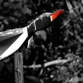 The Ugly Duckling by Domenic Gorin - Artistic Objects Other Objects ( bird, abstract, cool, red, funny )