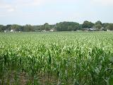Door de mais-velden.