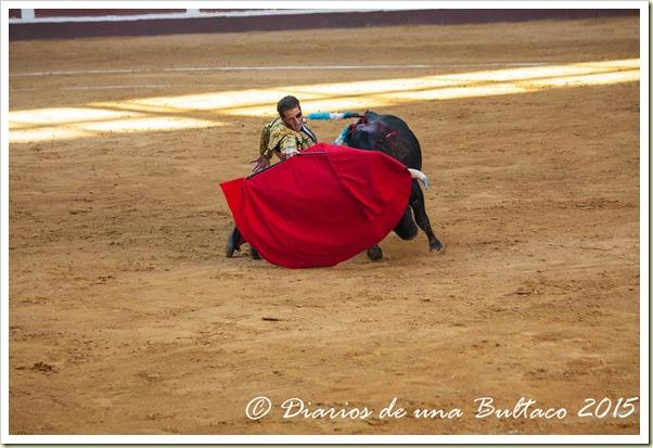 Toros Feria 2015-9875