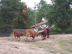 2006.08.28-005 watussis