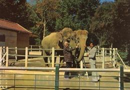 ermenonville éléphants