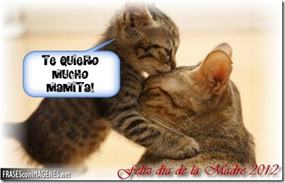 gato-besando-mama1
