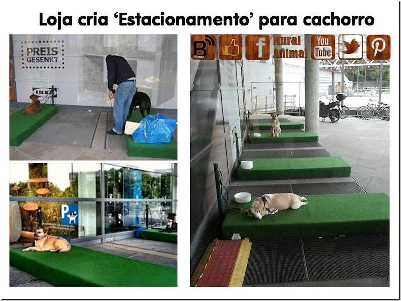estacionamento-cachorro