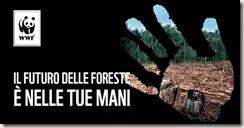 WWF per le Foreste