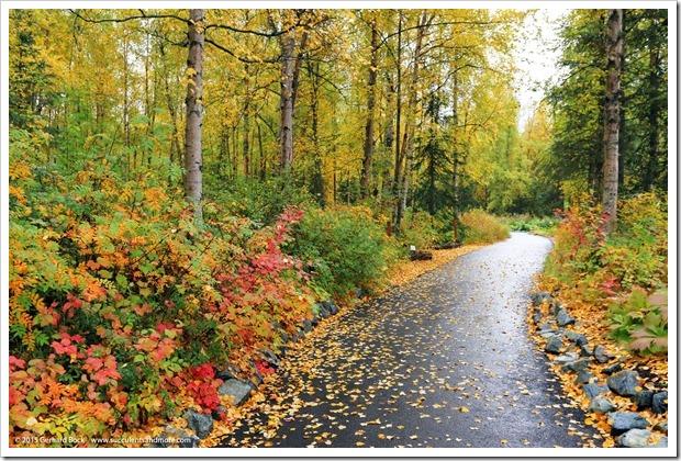 150911_AlaskaBG_7