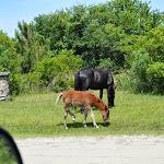 Corolla Wild Horses - 06052013 - 02