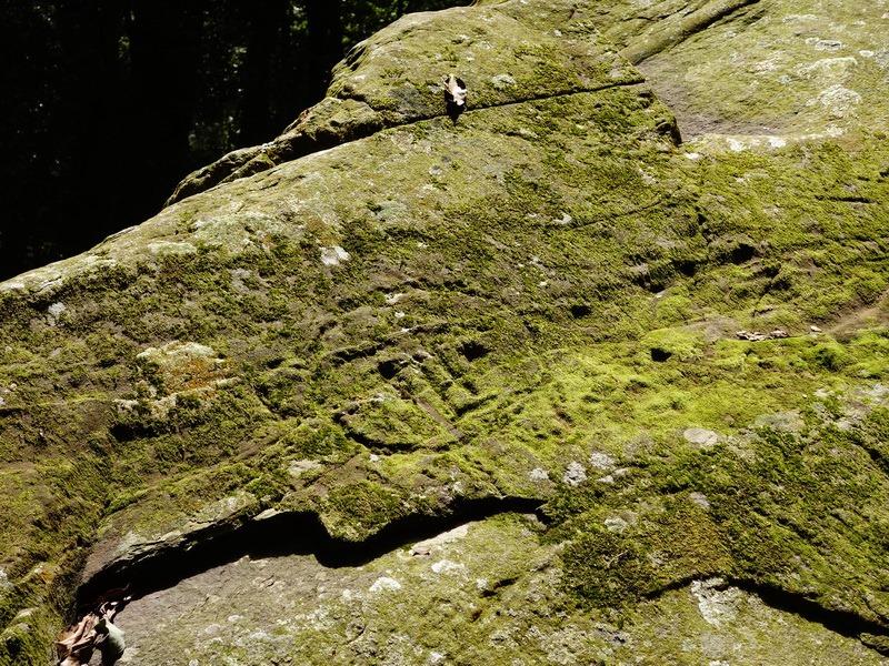 2014_0101-0105 萬山神石、萬山岩雕順訪萬頭蘭山_0750