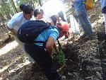 El castor Marcos plantando una especie de laurisilva