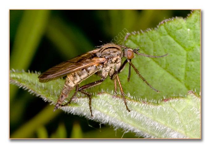 2 Bugs 9  Dance Fly