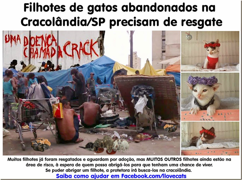 gatos_cracolandia