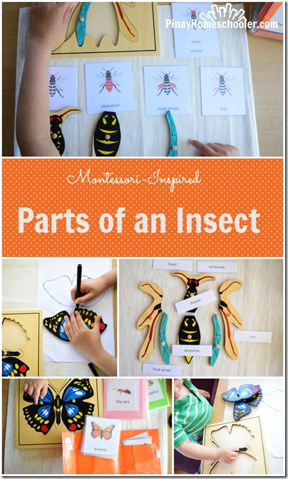 Parts of an Insect PIN