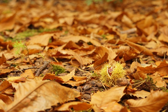Holt country park Norfolk in autumn