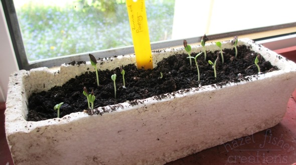 2015 April 30 monthly review gardening seedlings zinnia hazelfishercreations