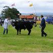 cattle12.jpg