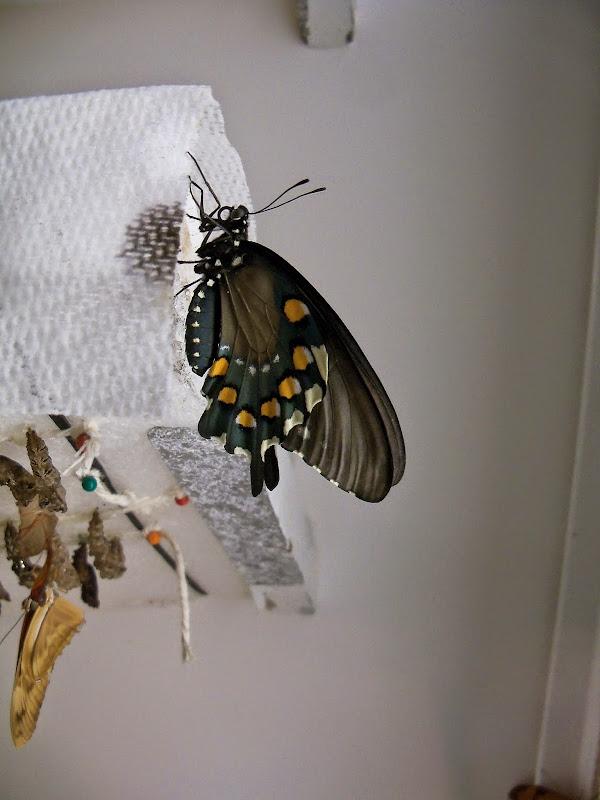 Houston Museum of Natural Science - 116_2872.JPG