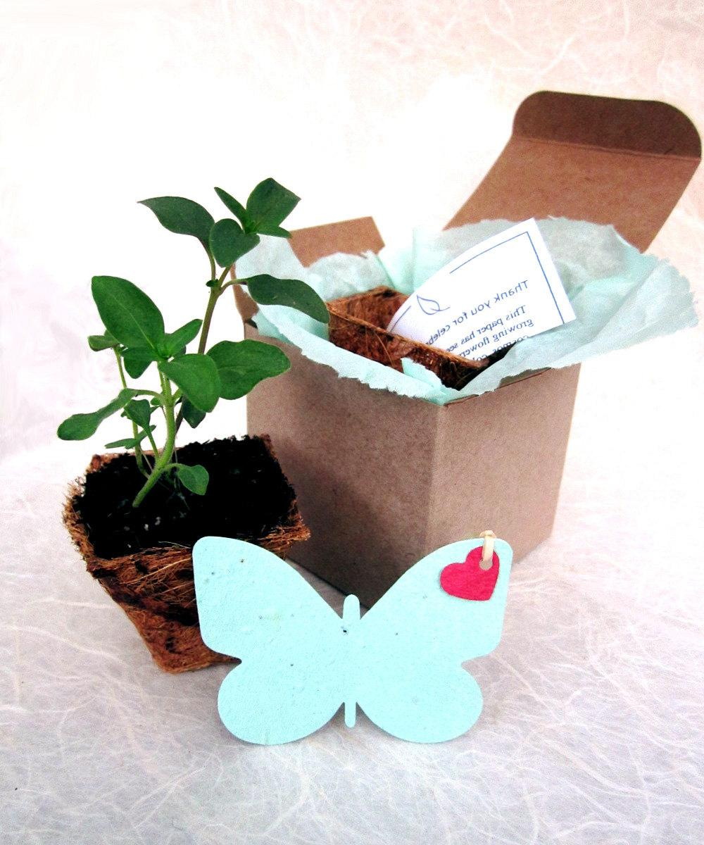 Pots - Garden Flower Seeds