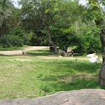 The Kilimanjaro Safari in Africa in the Animal Kingdom in Disney 06092011bb
