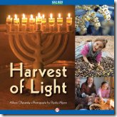 Harvest of Light, by Allison Ofanansky