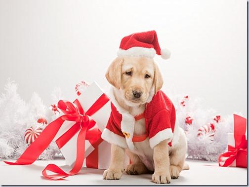 perro navidad (11)