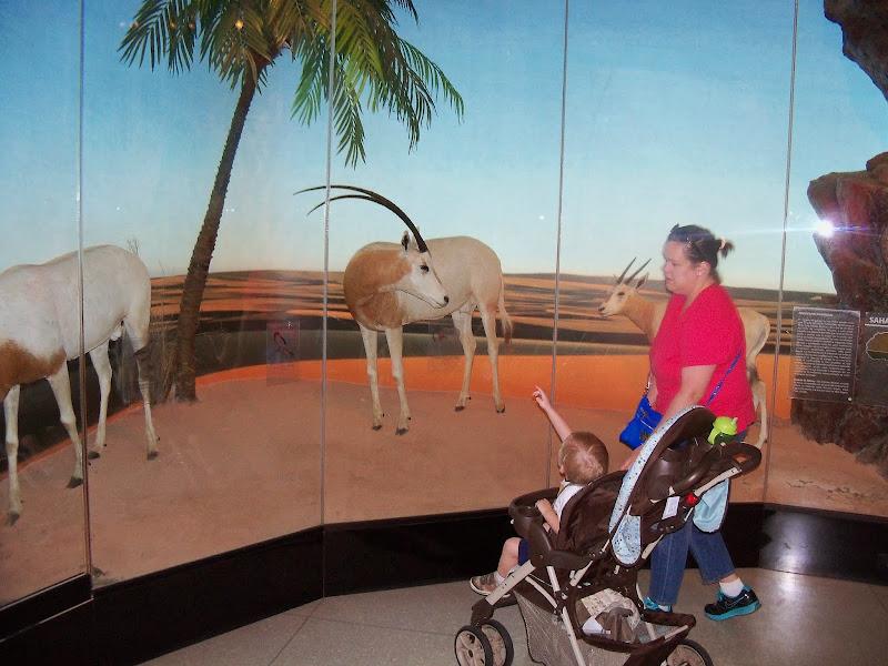 Houston Museum of Natural Science - 116_2818.JPG