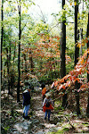 Strolling through the forest in autumn, Catoctin Mountain Park in Thurmont, Maryland.