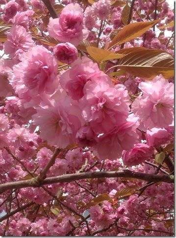 Ipad mini  22-04-2015 13-34-03
