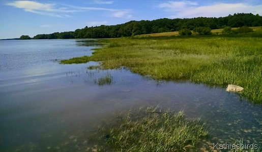 7-4-15 marsh grass at high tide