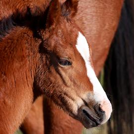 by Dennis Robertson - Animals Horses