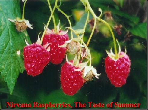 raspberries chilliwack