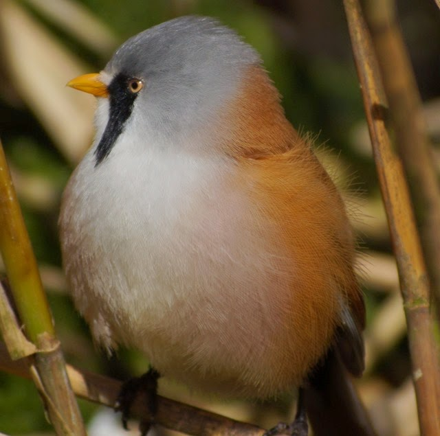 Digiscoping at Pensthorpe with Wex and Danny Porter