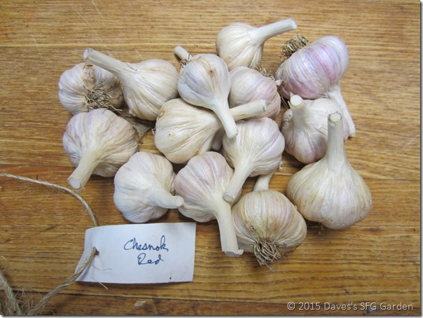 Chesnok_Red_garlic