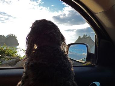 La Push Ocean Sunset with Skruffy