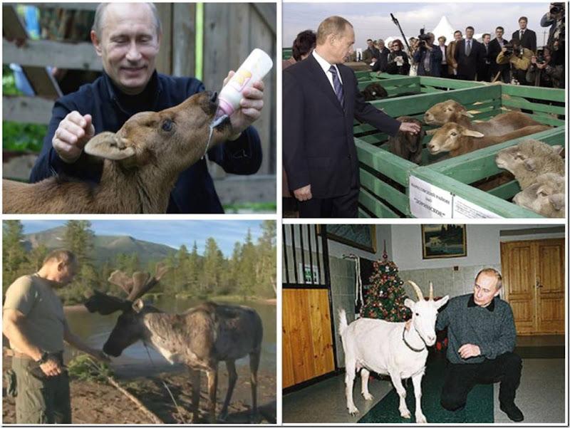 putin-animals06