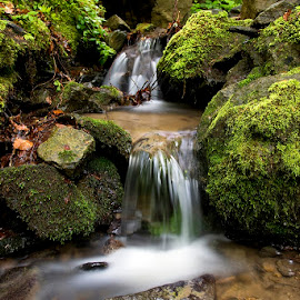 by Siniša Almaši - Nature Up Close Water ( water, up close, stream, nature, green, cascade, view, stones, light, spring, rocks, depth, colours )